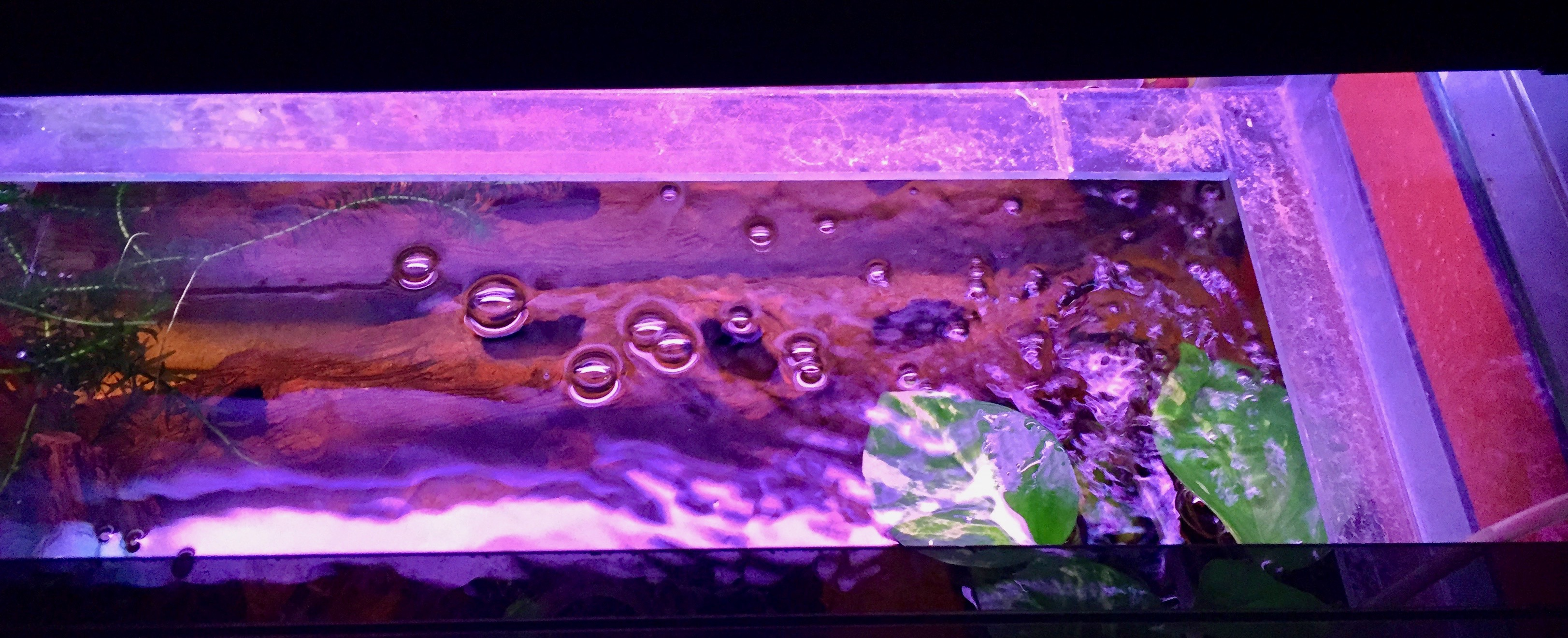 Water bubbles and plants in a tank